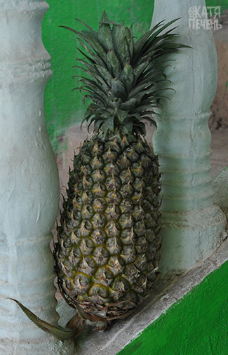 pineaplle-ananas-goa-50-rupij
