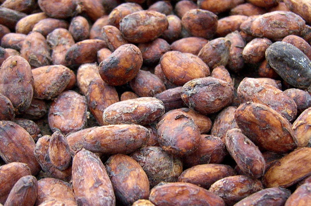 cacao-bobi-kupit-goa-india